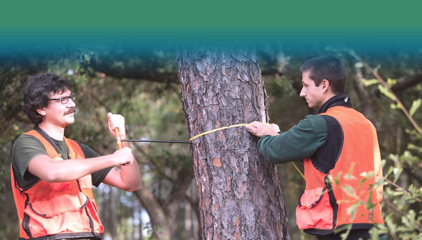 Forestry programs, Georgetown county SC